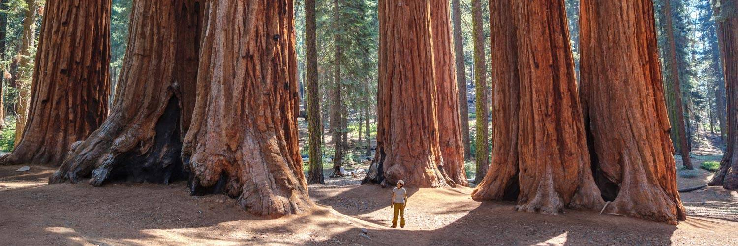 Sequoia National Park Banner