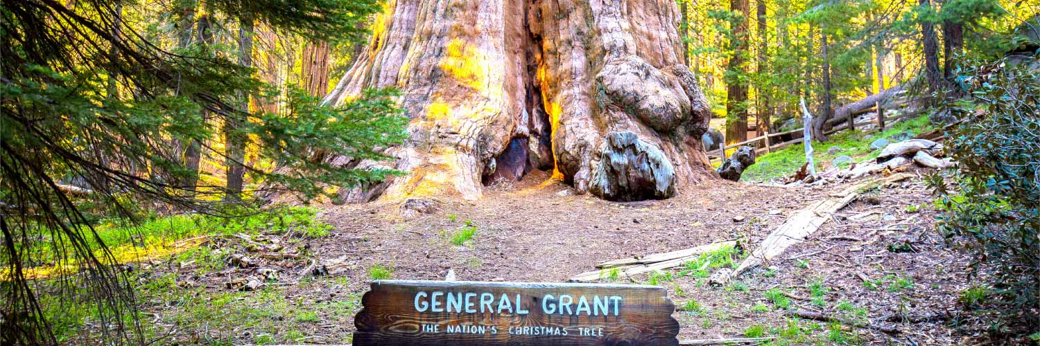 General Grant Tree Banner