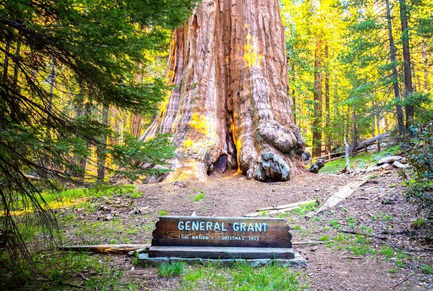 General Grant Tree Spotlight