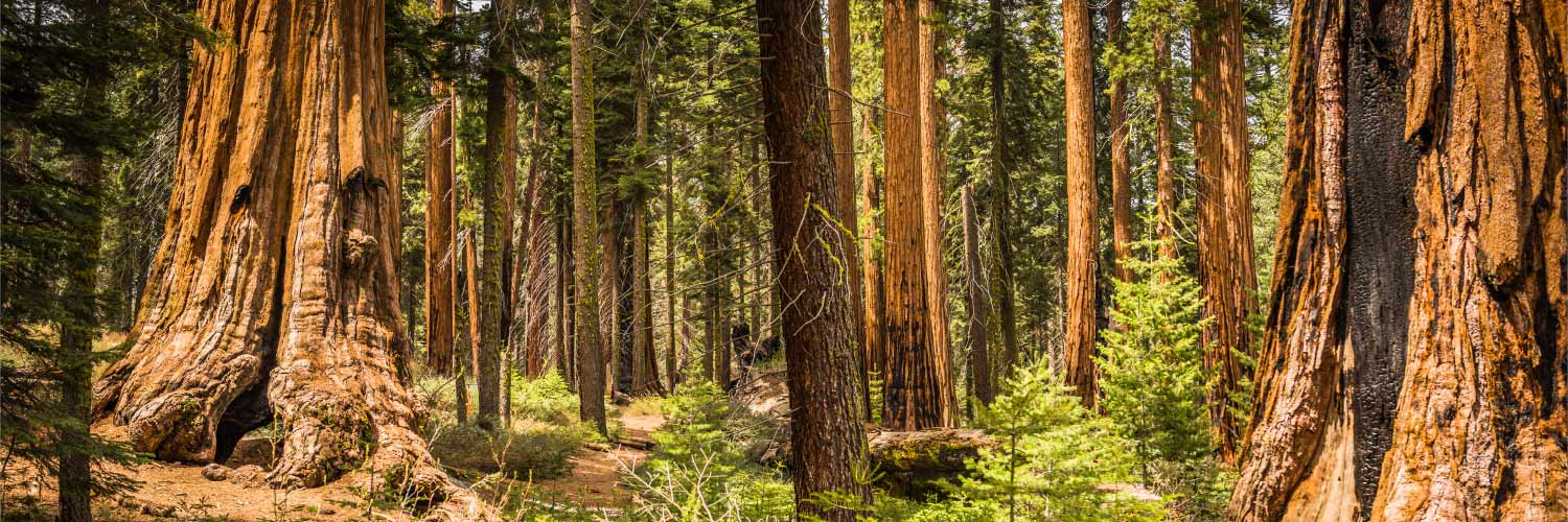 Cell Service Wifi Gas & More   Sequoia & Kings Canyon Park