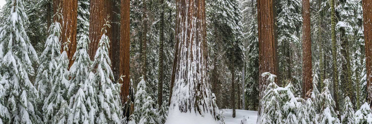 Sequoia National Forest in winter