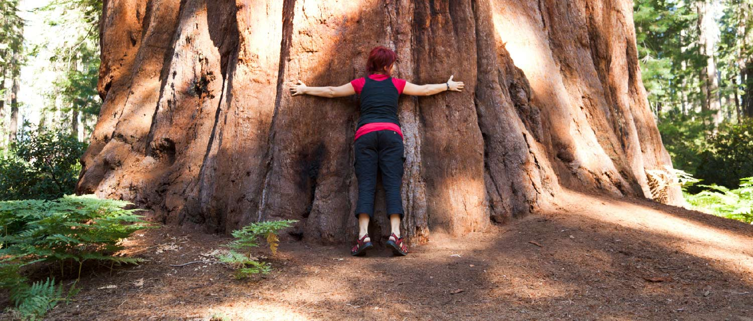 A park visitor embraces a giant sequoia tree