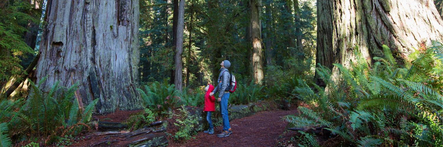 Specials Deals Sequoia Kings Canyon National Parks