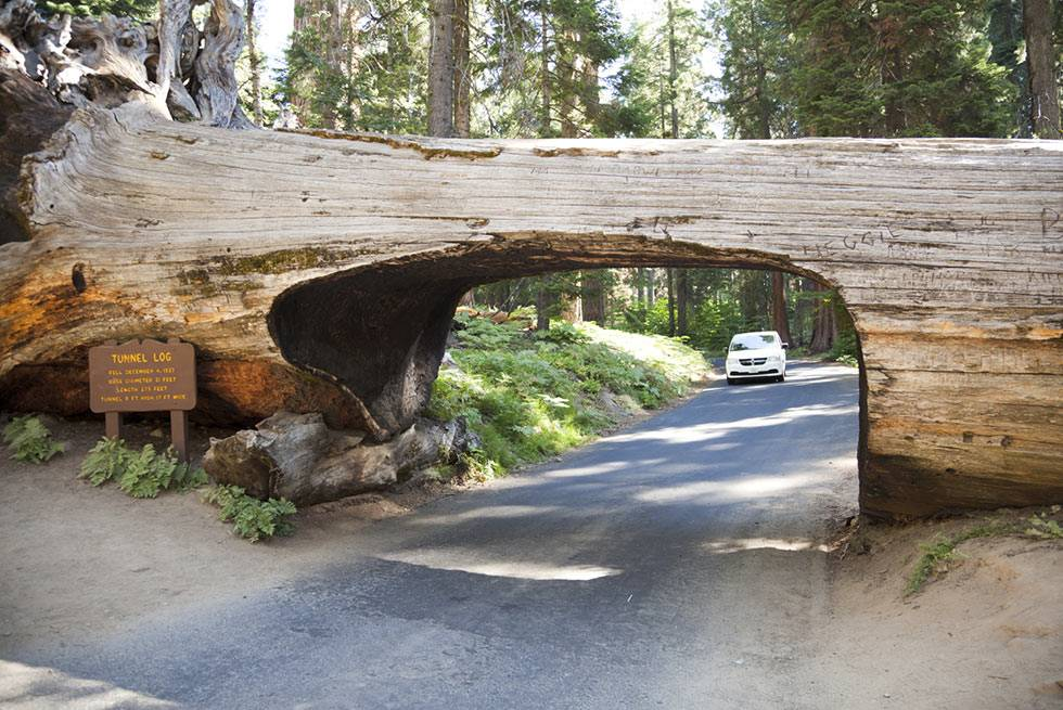 Tunnel Log Sequoia National Park
